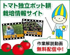 トマト独立ポット耕栽培情報サイト